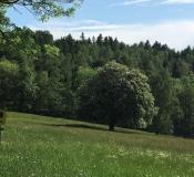 Naturschutzwiese